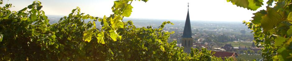 Weingut Reinisch in Tattendorf