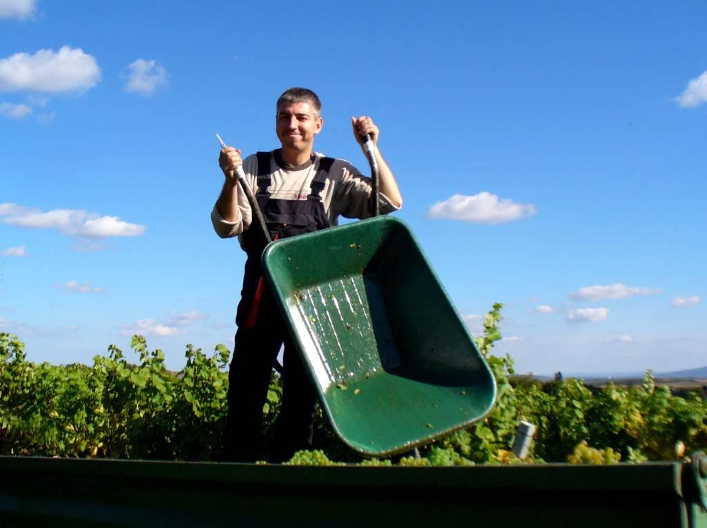 Österreichische Weine gehören zu den beliebtesten weltweit