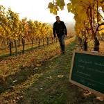 Ökologischer Wein Winzerhof Allacher